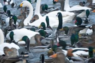 Blog-viele-Vögel-See-1025x683