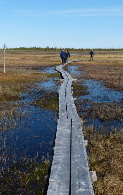 Klein-Boardwalk-Bog-1