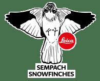 Leica-Sempach-Snowfinches
