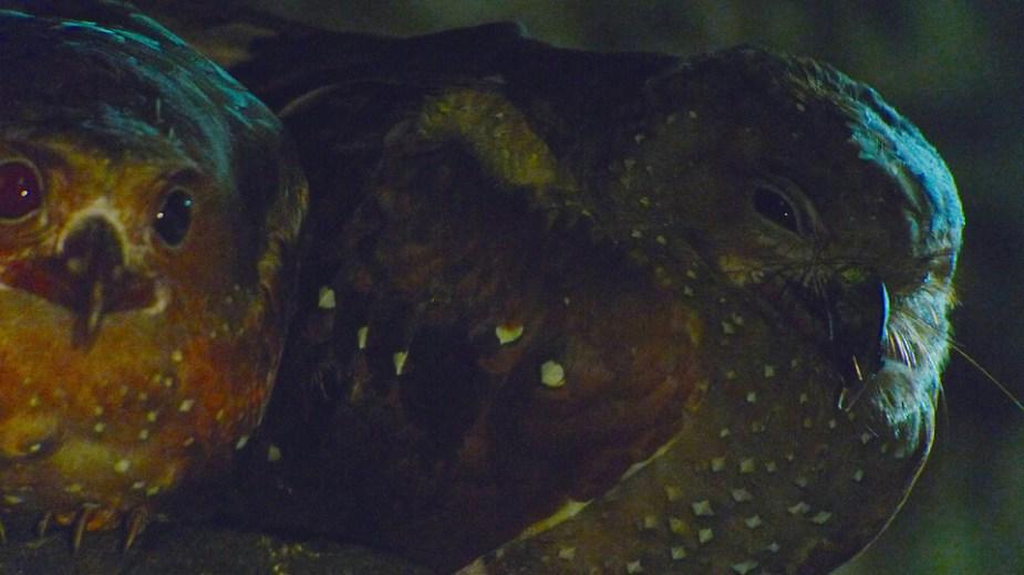 Oilbird-no-light_edited-1