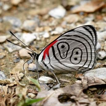 88-butterfly-1025x1025