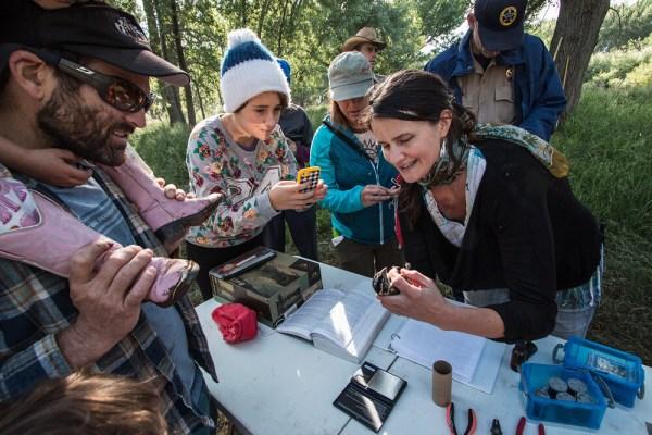 PMR, Bird Banding, Oxbow Preserve, Durango, La Plata County, Colorado, USA, North America