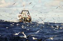 Cape-Horn-pelagics-1025x683