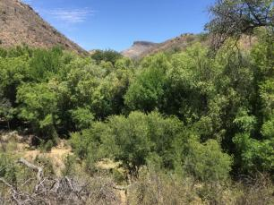 ca-gulch-habitat1-1025x769