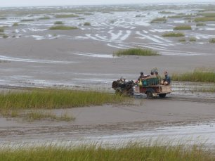 chinese-fishermen-driving-out-through-clumps-of-cordgrass-c-Rich-Hearn-WWT