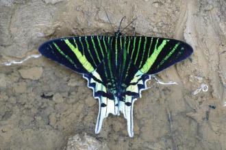 moth-Shiripano-lodge-Ecuador-1025x684