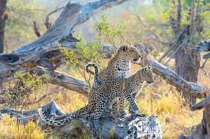 Belmond_Botswana_Lodge_www.marcstickler.at-74_klein