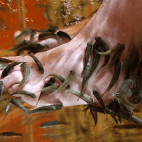 People Get HIV Through Unprotected Sex, Not Because They're Going For Fish Pedicures!
