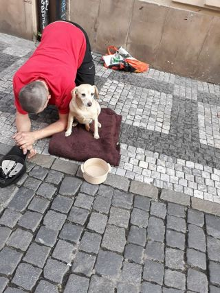 Prague doggo 1