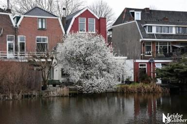 Haarlemmerweg (6)