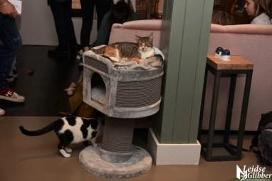Kattencafé Sophie (8)