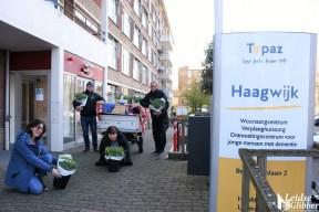 Tulpen Haagwijk CHDR Rederij (43)