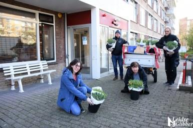 Tulpen Haagwijk CHDR Rederij (40)