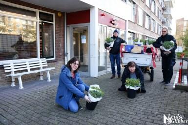 Tulpen Haagwijk CHDR Rederij (41)