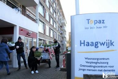Tulpen Haagwijk CHDR Rederij (37)