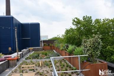 Roof bar PLNT (22)