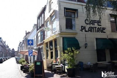 plant (2)