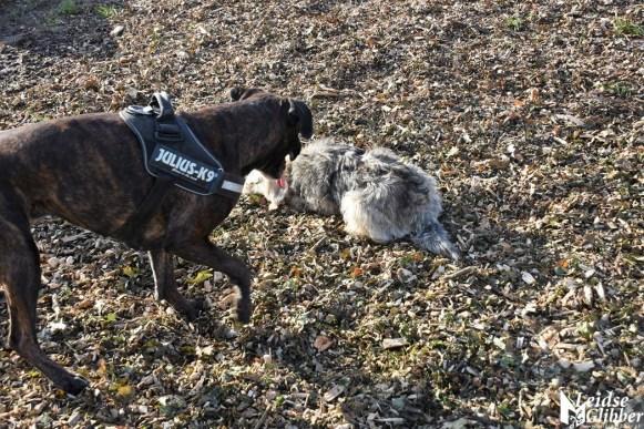 Honden speelveld Zoeterwoude (58)