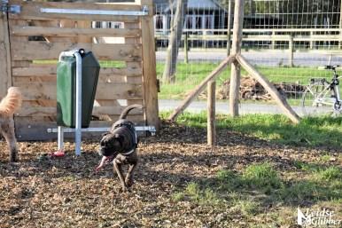 Honden speelveld Zoeterwoude (37)