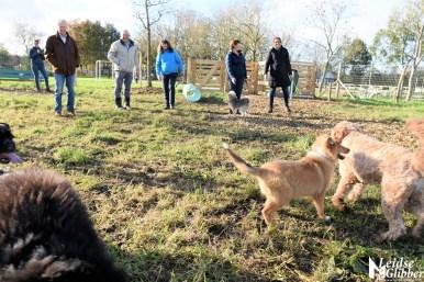 Honden speelveld Zoeterwoude (32)