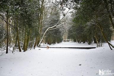 6 Sneeuw De Leidse Hout (25)