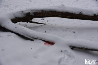 6 Sneeuw De Leidse Hout (24)