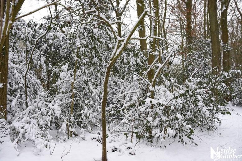 6 Sneeuw De Leidse Hout (15)