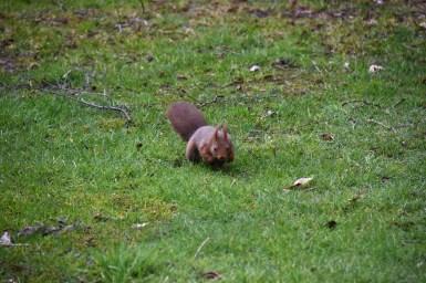 eekhoorn (8)