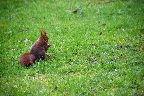 eekhoorn (11)