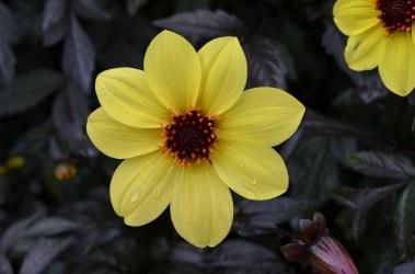 16.savillgardensflower6steveb