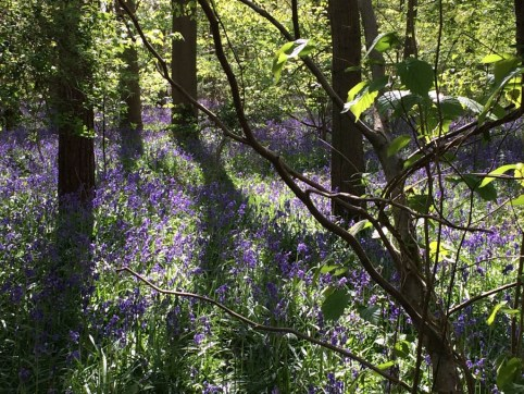 10.ruthlancashire--bluebellwoods