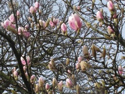 2.andyarchard--magnolia