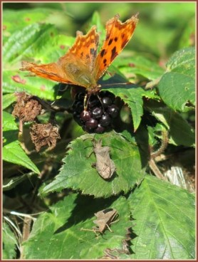 Insects - Late Summer 16