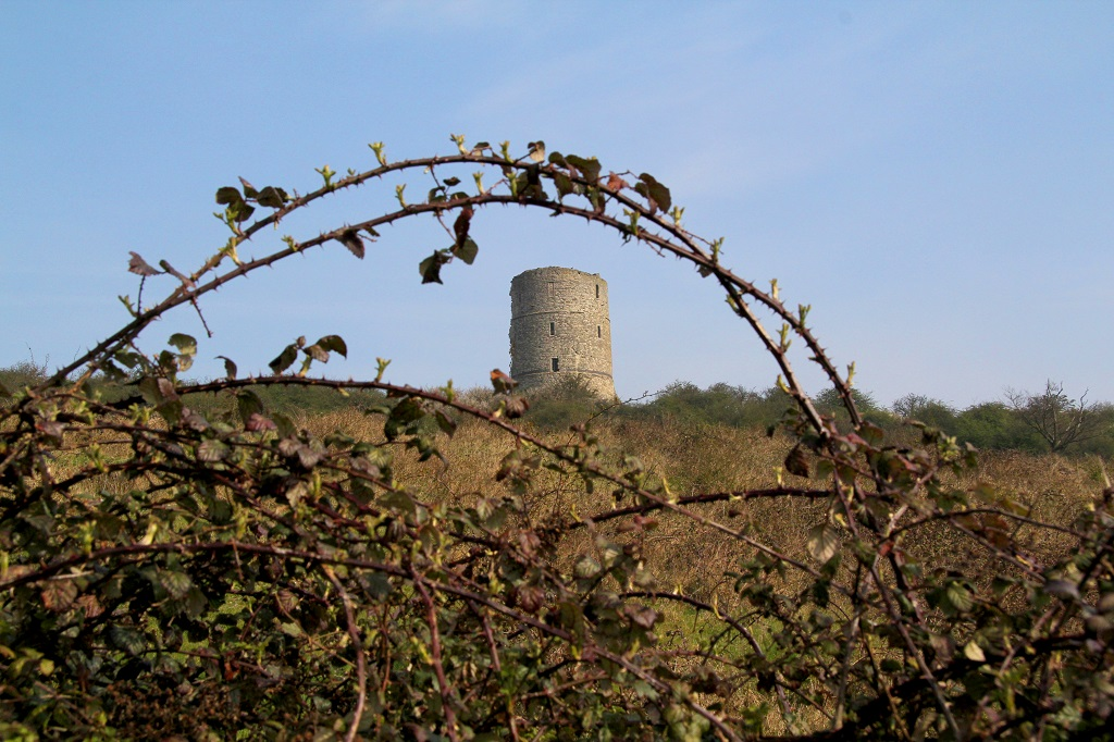 Hadleigh Castle through brambles
