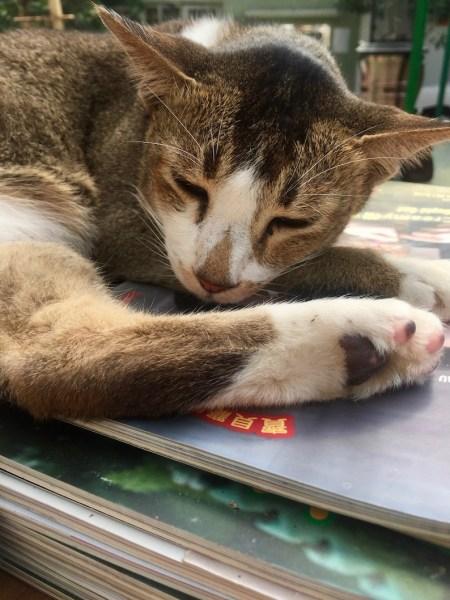 Anima Society For Protection of Animals Macau.