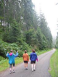 Walking in beautiful Alsatian forests
