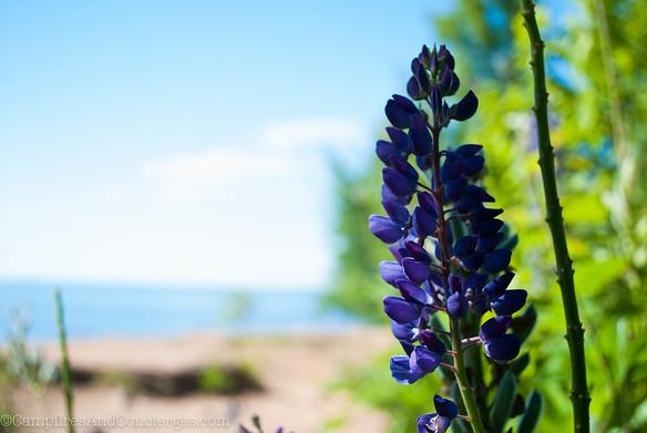 Porcupine Mountains State Park / Lake Superior