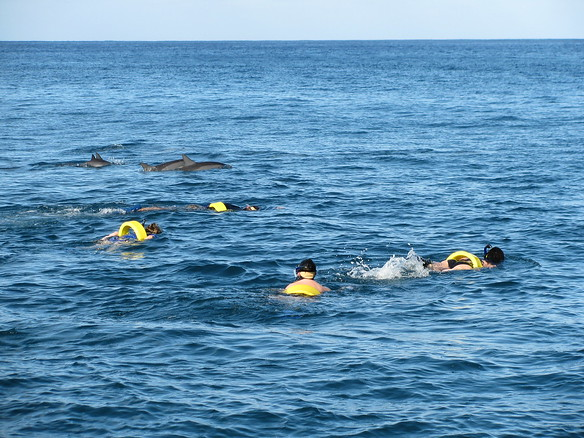 12/24 - Waianae Wildlife CruiseSnorkeling with Spinner Dolphins