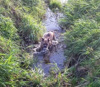 #04 Bulldoggen-Dame Abby. Foto: Cindy Göbel