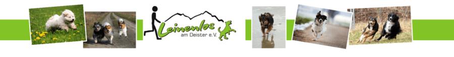 """Der Verein """"Leinenlos am Deister e.V."""" macht sich für eine ganzjährige Freilauffläche in Springe stark und sucht ein passendes Vereinsgelände."""