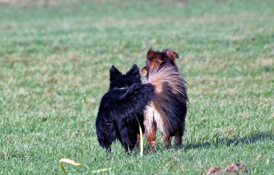 # 9Wahre Hunde Freundschaft….heißt immer in die selbe Richtung zu blicken Mare und Akito