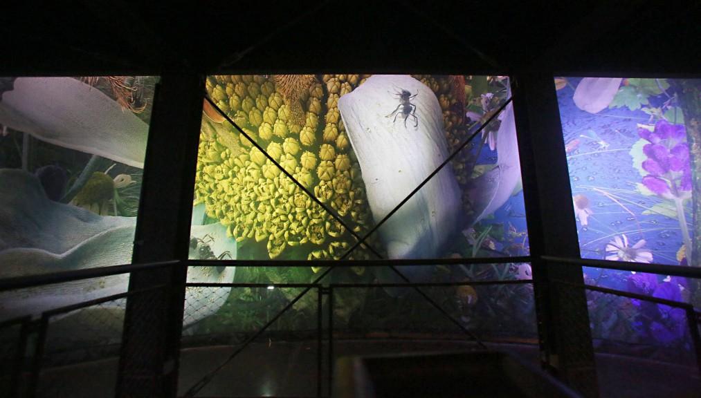 Carolas Garten exhibit