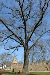 Das Kloster Nimbschen - ein ehemaliges Zisterzienserinnenkloster St. Marienthron - vor den Toren von Grimma in Sachsen, direkt an der Mulde gelegen, am Lutherweg (09.04.2015). Foto: Volkmar Heinz / volkmar@heinz-report.de