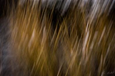 Frozen grass in the wind