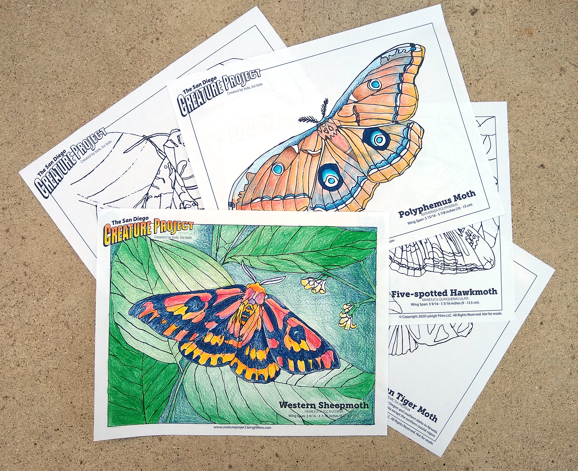 San Diego Creature Project Moth Coloring Pages 5 Leirigh Films