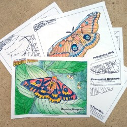 SD Creature Project Coloring Pages Moth