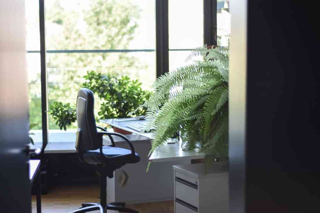Lärm im Büro reduzieren mit Pflanzen