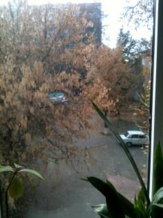 Fenêtre sur cour