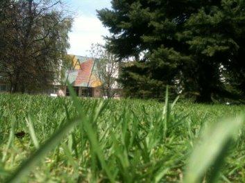 La pelouse printanière du parc de l'institut
