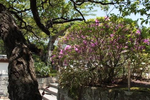 Jardin d'Enkaguji